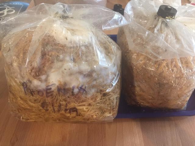 Grow Mushrooms with Straw