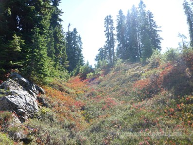 Fall colors in August