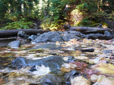 Leaves in the creek