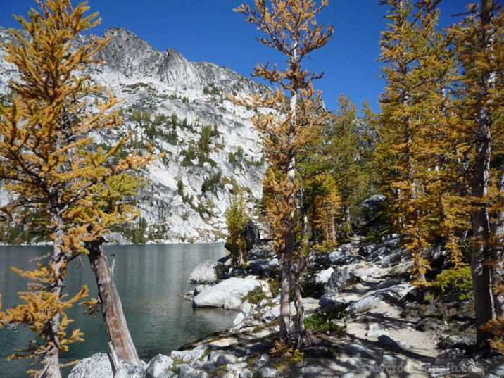 Larches and Inspiration