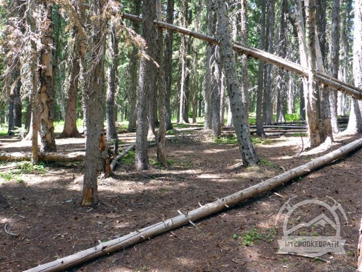 Large camp area next to Ingalls Creek