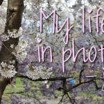 My life in photo's – juli #1