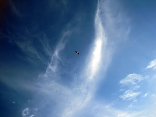 Seagull in blue sky with clouds