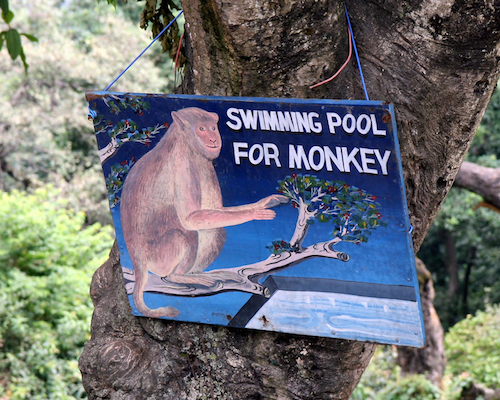 Swimming-pool-for-monkey