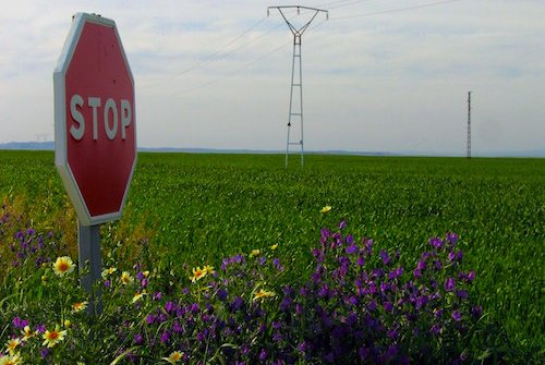 stop sign in a field