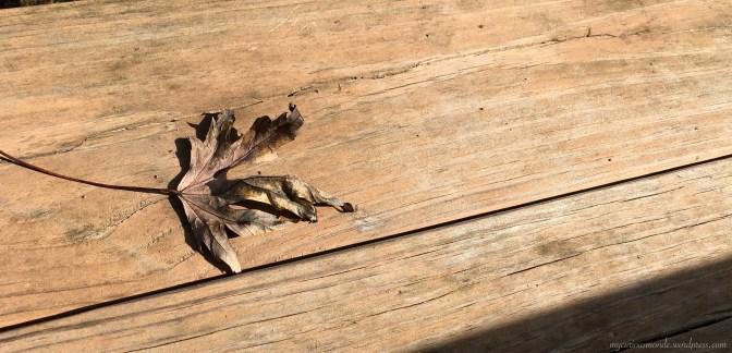 Crunchy maple leaf