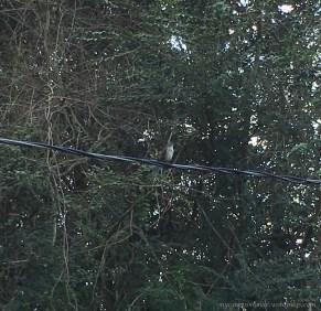 Mockingbird singing to me
