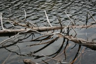 Lake wood