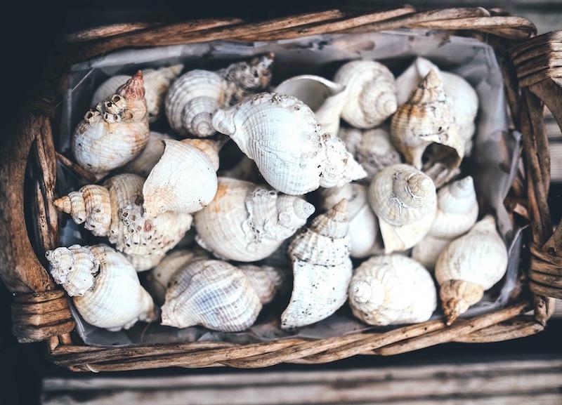 sea-shells-schelpen-zee-oceaan-strand-beach