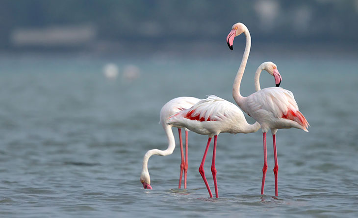 Image result for flamingos in italy