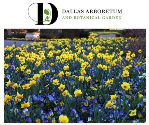 More About Dallas Arboretum & Dallas Arboretum Coupons Introduction. The Dallas Arboretum and Botanical Garden is a large public botanical garden which located at East Dallas, Texas, on the shores of White Rock Lake.