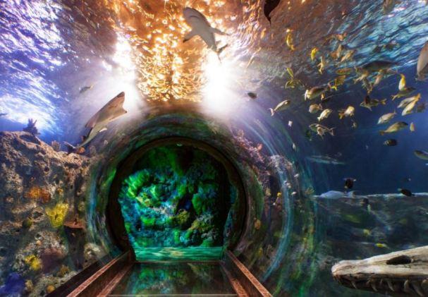 My Dallas Mommy Celebrate Shark Week At Sea Life Grapevine Aquarium