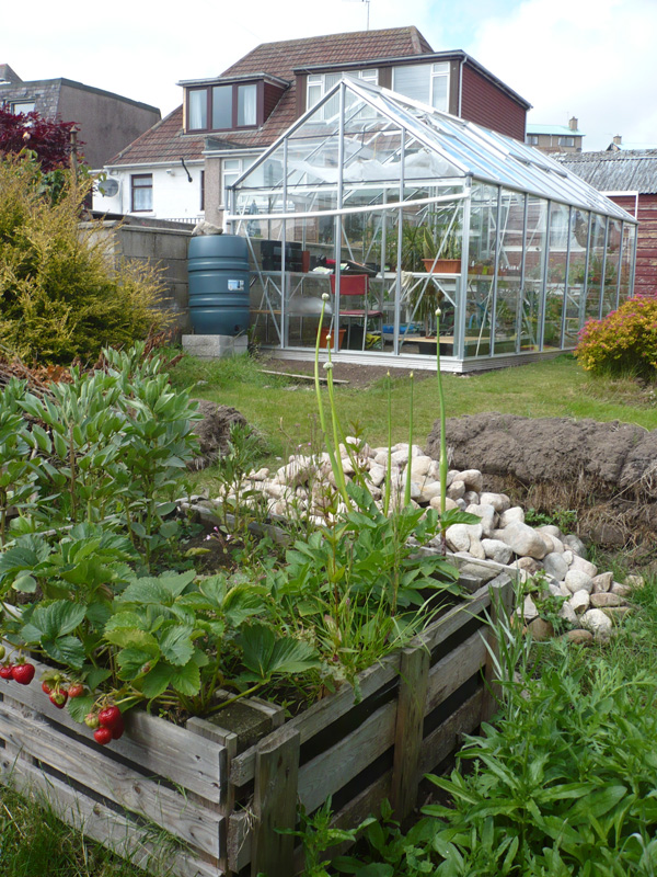 Veg bed with greenhouse in background
