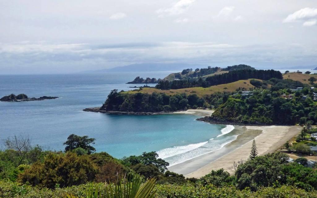 Little Palm, Waiheke, New Zealand