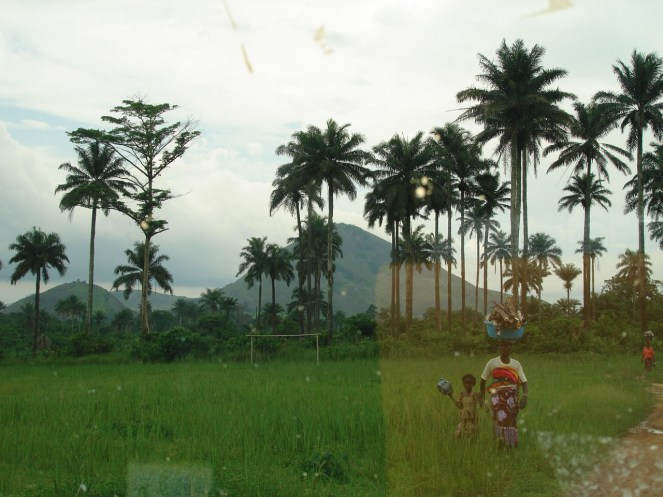 palm trees and rice field in Kailahun