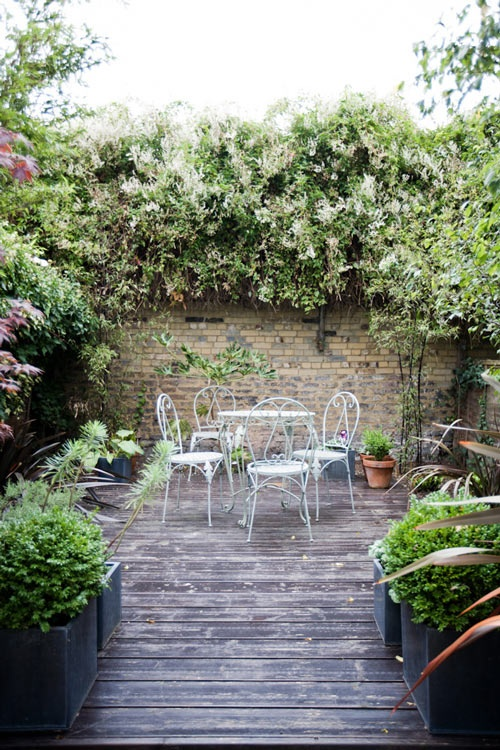 Climbing plants and outdoors15