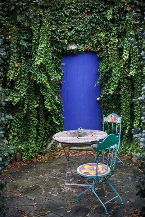Climbing plants and outdoors3
