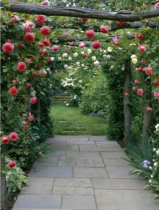 Climbing plants and outdoors6