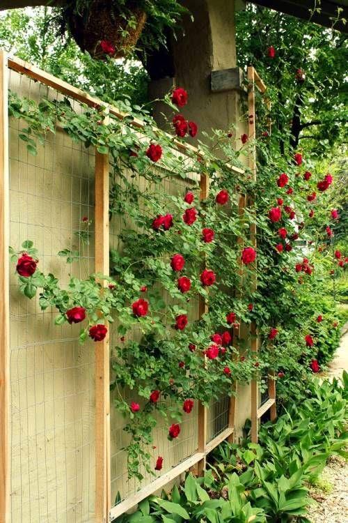 Ideas for small gardens - Balconies7