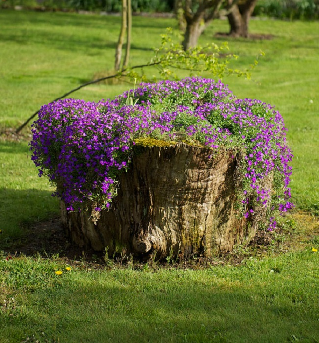 Old stumps flower gardens2