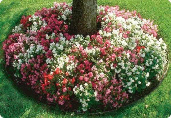 flowers arounf trees8