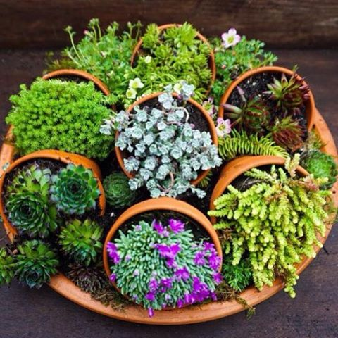 deco with succulents10