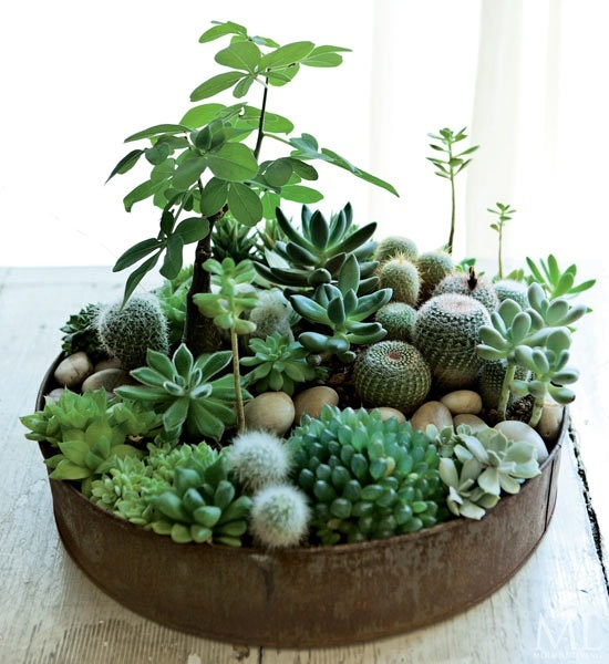 deco with succulents7
