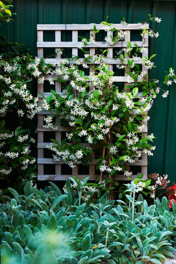 trellis in the garden5