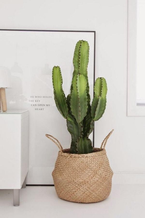 decorating interiors with cactus12