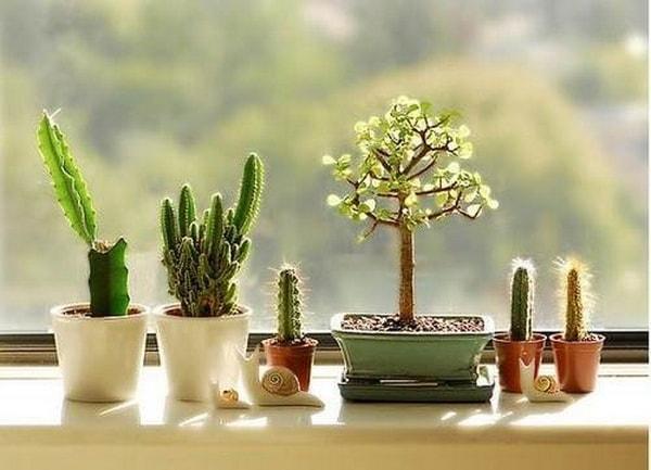 decorating interiors with cactus7