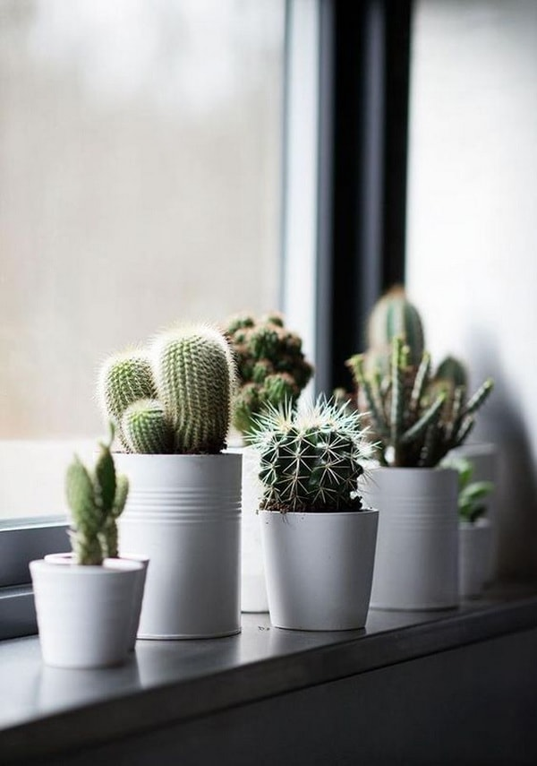 decorating interiors with cactus8
