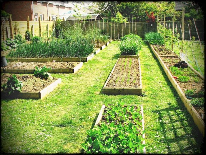 45 Affordable DIY Design Ideas for a Vegetable Garden | My ...
