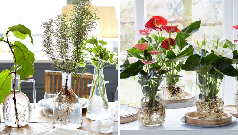 Gardening 16 Plants That Take Root And Grow In Water Without Soil My Desired Home
