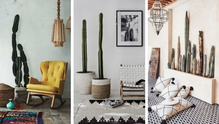 When cactus can be a natural work of art in our living room