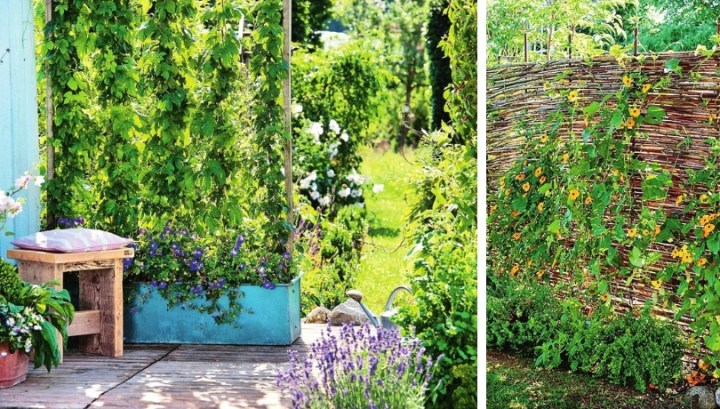 How to create a DIY private zone in your backyard or garden