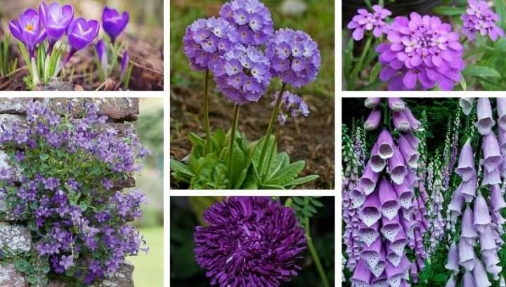 Arrangements with purple flowers – Gorgeous shades in your garden