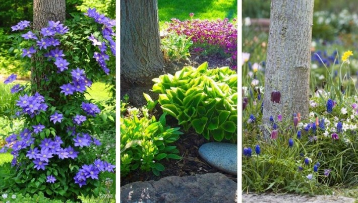 Flower bed designs under trees: 32 juicy options in the shade