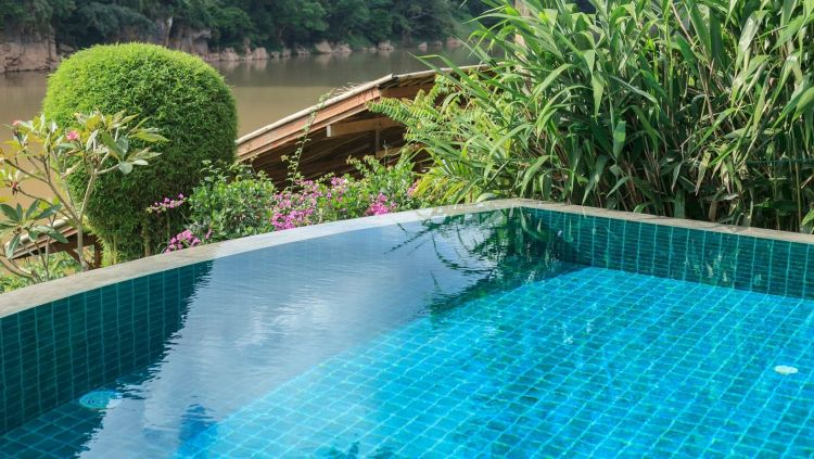 15 Best Plants for Swimming Pool Landscaping