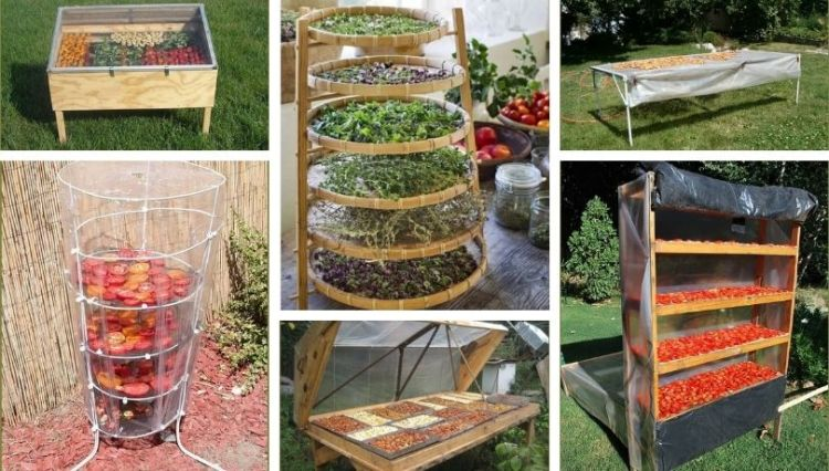 Sun-drying vegetables and fruits for long-term storage: 40 clever and creative ideas