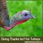 Giving Thanks Isn't for Turkeys