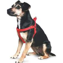 ANcol Dog Harness