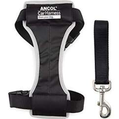 Ancol Padded CAr Harness