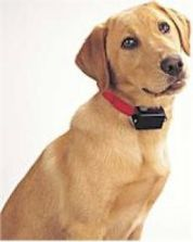 CONS remote control vibrating dog collars