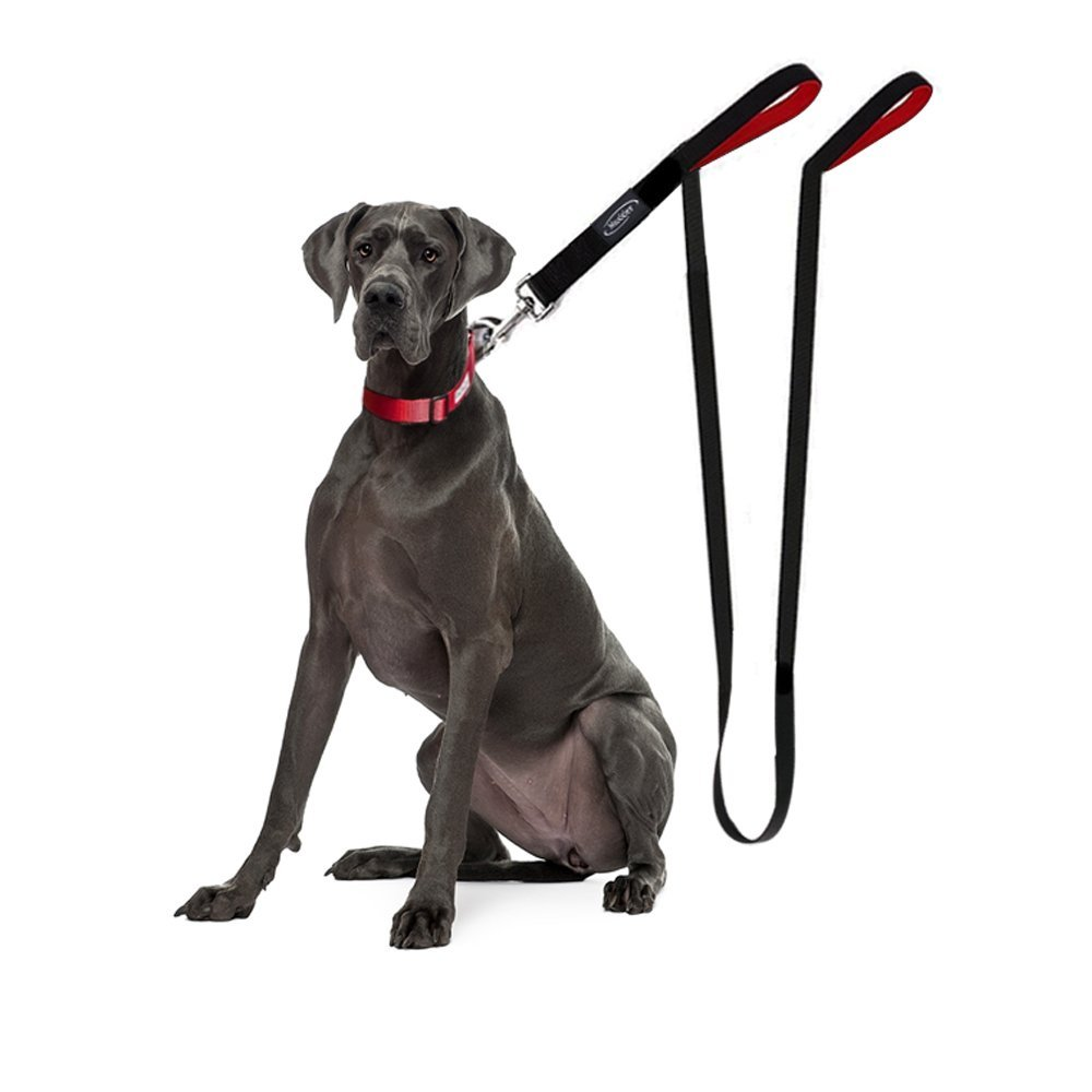 Best No Pull Dog Harness: How to Stop Your Dog From