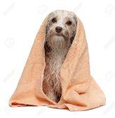 Best Dog Grooming Baths