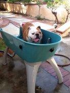 best dog grooming baths tubs