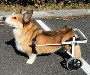 best dog wheelchairs K9 Carts