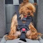 Best 5 Small Dog Booster Seat Allow Your Dog To Ride Comfortably