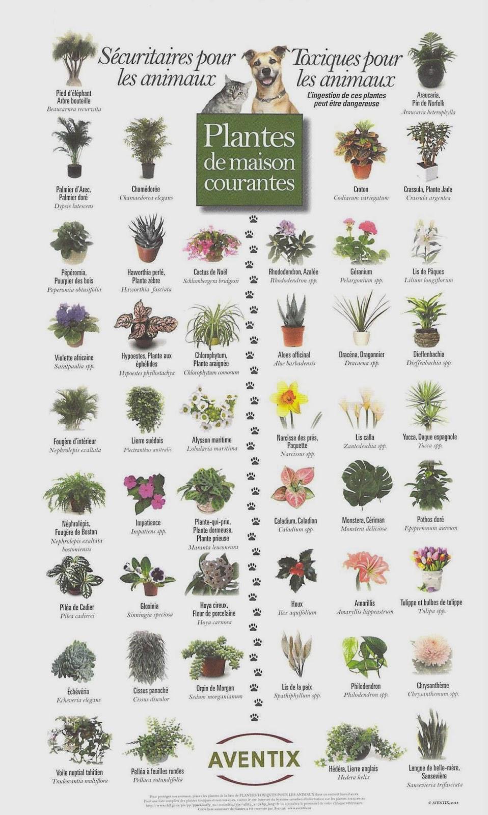chien-mange-plantes-toxiques