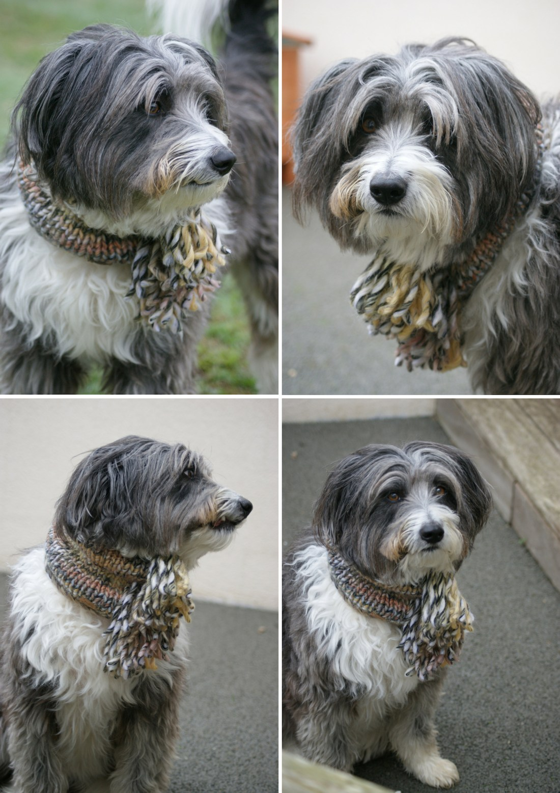 Aston's Snood (2)
